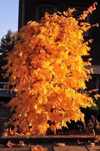 Herbst_Altenbochum