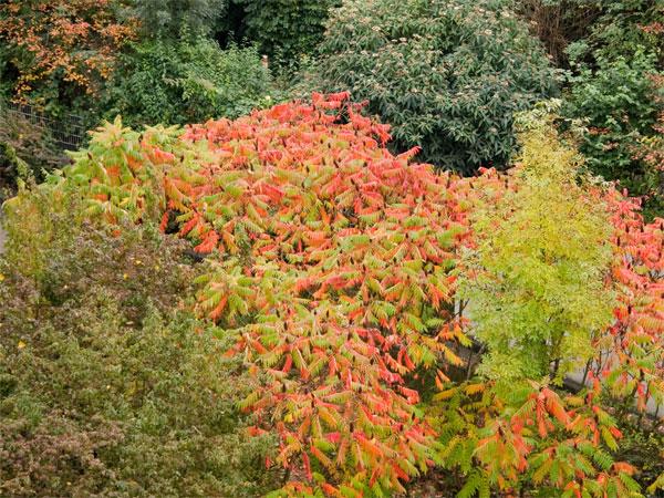Herbstliche Pflanzenwelt